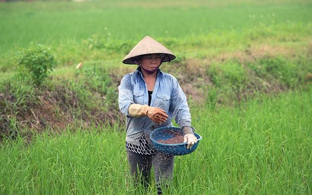 Đảm bảo công tác an toàn lao động trong ngành nông nghiệp